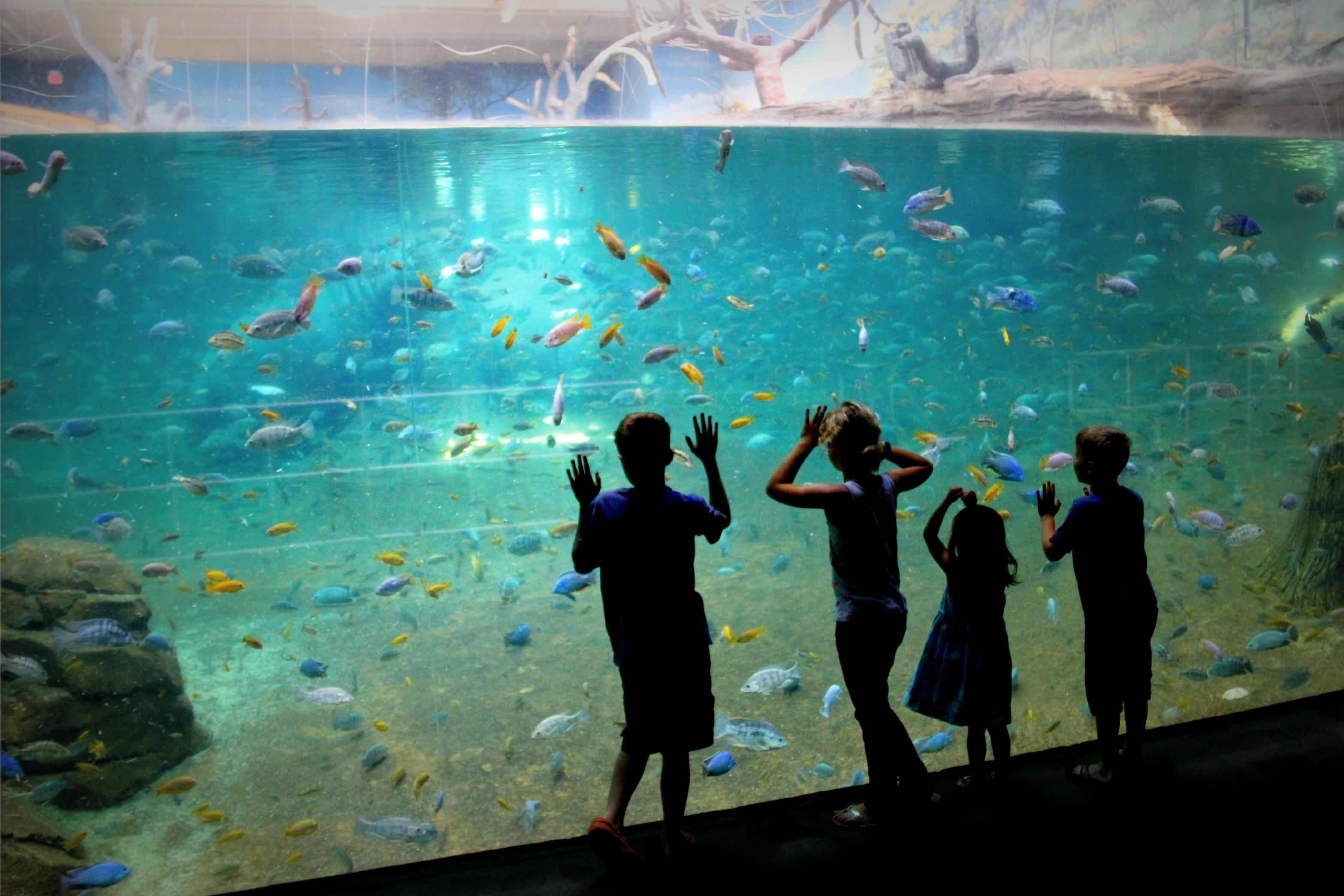 My Favorite Summer 2013 Day Yet Adventure Aquarium My