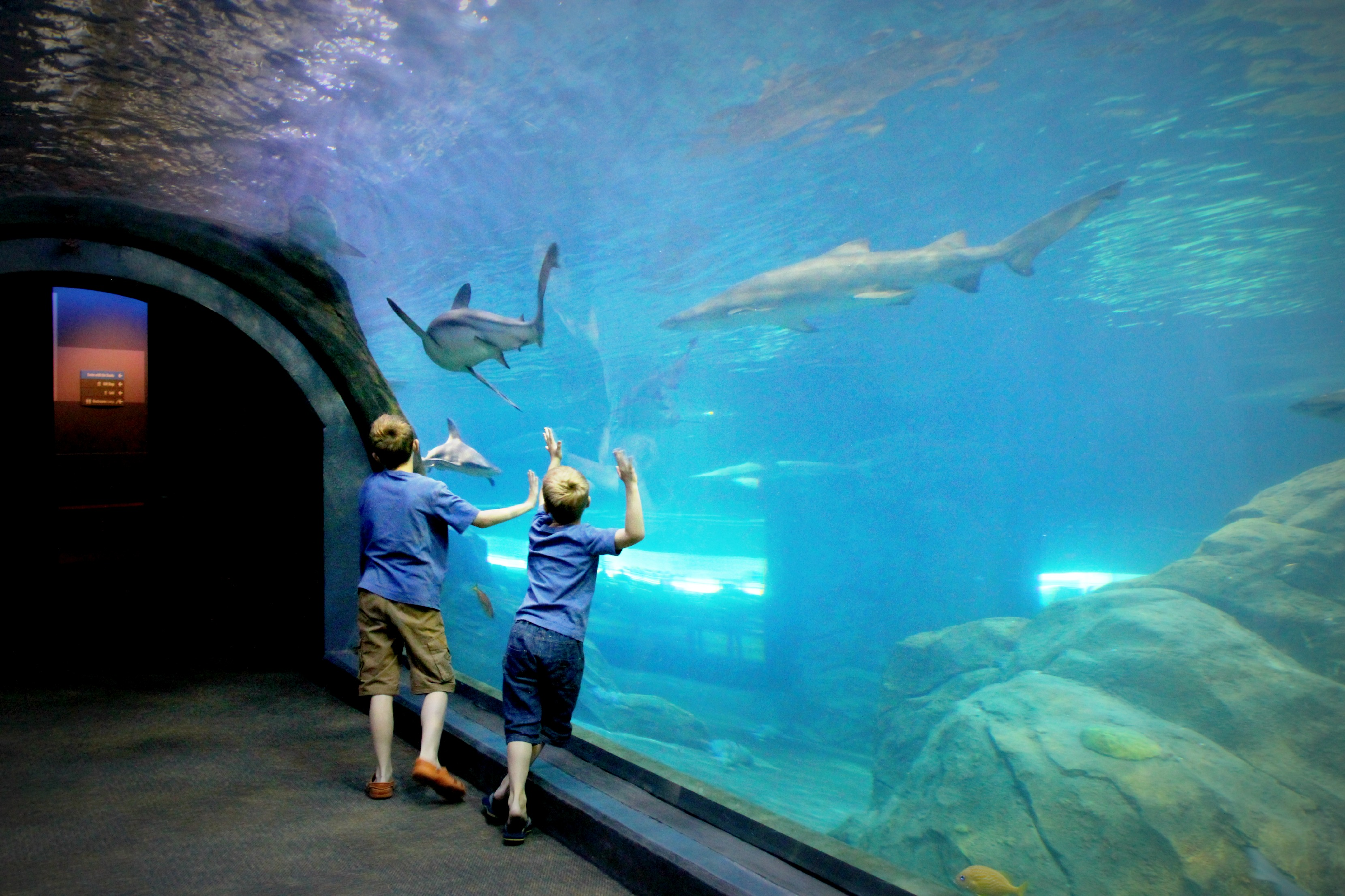 Aquarium adventure aquarium adventure cleveland hot list for The camden