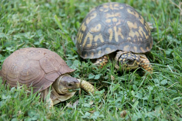 turtles 2 in yard